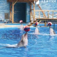 PLUS会员:天津海昌极地海洋公园 特惠单人年卡