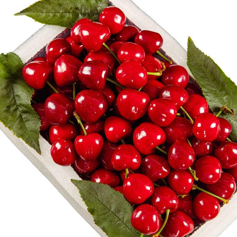 PLUS会员 : 阿树尚  山东美早大樱桃   净重4.5以上