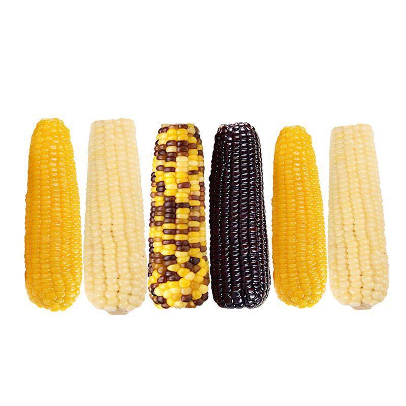棒棒香 真空包装熟制玉米棒 6支