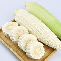 华田禾邦 玉米棒 水果牛奶玉米 4斤 6-8根装