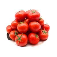 新鲜小西红柿  5斤