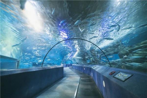 【南京玄武区】海底世界 1.2m以下儿童和70岁以上老人免费