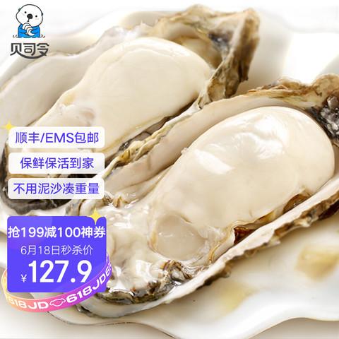 BEISILING 贝司令 乳山生蚝鲜活2XL号 34-42个 12斤装净重5KG 烧烤食材 海蛎子牡蛎 生鲜贝类 海鲜水产