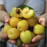鲜喜欢 小白杏 4斤