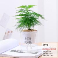 亿昂  办公室桌面盆栽 水培多肉植物 文竹
