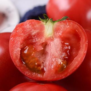 古寨山 山东海阳普罗旺斯西红柿