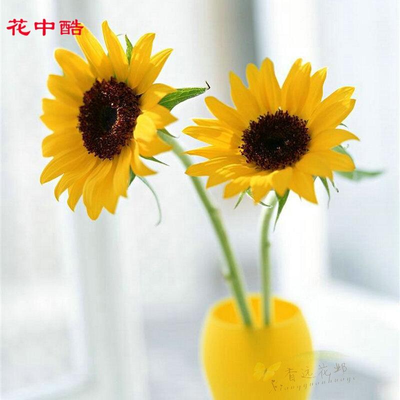 花中酷 切花向日葵15粒 彩包装