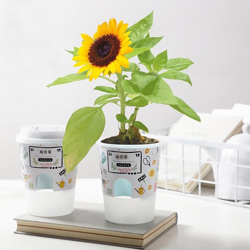 PLUS会员 : 九月生 向日葵种子花盒