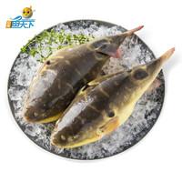 PLUS会员:ZHONGYANG FISH WORLD 中洋鱼天下 河豚鱼 150-200g