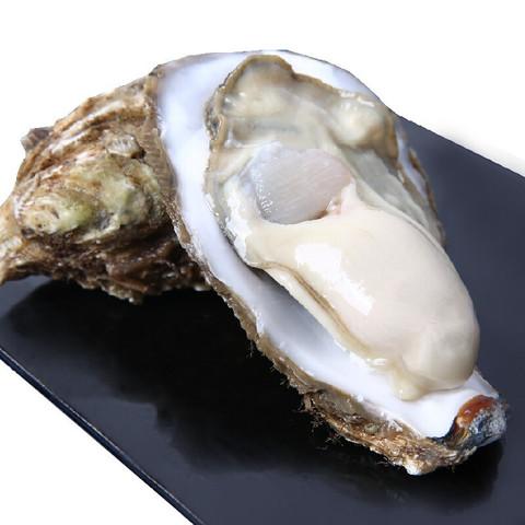 味库精选 乳山生蚝 鲜活 XL中号 16-22只 5斤装 净重2kg 牡蛎 海蛎子 烧烤食材 海鲜水产