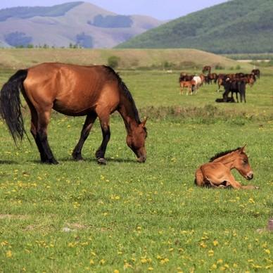 北京-内蒙古木兰围场+乌兰布统大草原旅拍3日游
