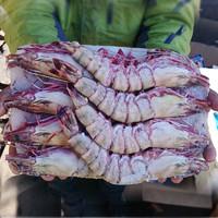 mr seafood 京鲜生 巨型黑虎虾 净重750g-800g 14-16个头 长18cm