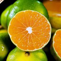 蜜橘 青皮蜜橘子 净重5斤大果(单果60mm以上)