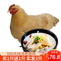 呈祥原粮喂养600天老母鸡 当天现杀整鸡肉 生鲜草鸡柴鸡 单只杀后净重约1kg 老母鸡 1只