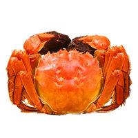 小编精选:又到一年食蟹时,尝尝御佰鲜大闸蟹,膏肥黄满,价格更心动!
