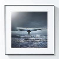PICA Photo 拾相记 Tomasz Zaczeniuk 作品《蓝鲸》33 x 33 cm 无酸装裱 限量50版