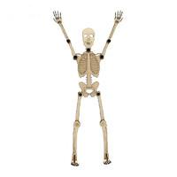 神孩子 人体骨骼拼装模型 人体骨骼模型