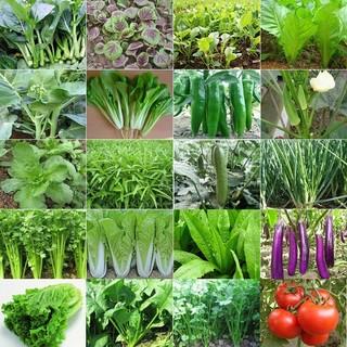 阳台盆栽 四季播种蔬菜 50包种子+肥2包