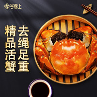 PLUS会员:今锦上 鲜活大闸蟹 8只 礼盒装
