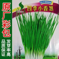 原厂彩装小葱种子小香葱四季易种生长迅速香味浓厚阳台盆栽葱种子