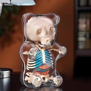 4D MASTER X JASON FREENY 软糖小熊透视解剖骨骼模型